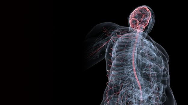 systeme-neuro-musculo-squelettique